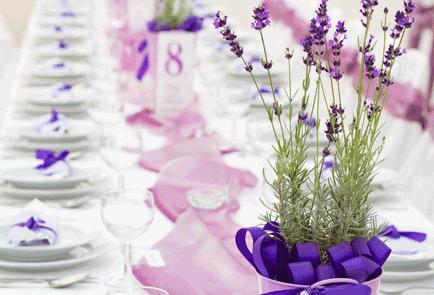 restaurant_paars_lavendel