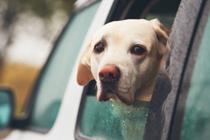 Neem jij je hond mee op huwelijksreis?